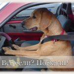 Что нужно знать путешествуя с собакой. Документы и условия перевозки.
