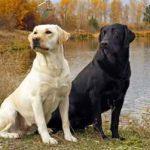Советы по выбору собаки для дома и семьи