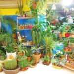 Що слід пам'ятати при придбанні рослин?