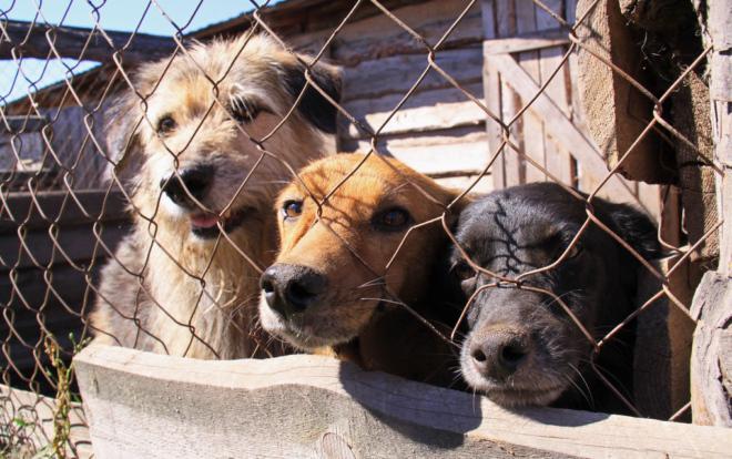 приют для временного содержания животных во Львове