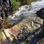 В Винницкой области в прошлом году выпустили в водоемы более 100 тонн рыбы