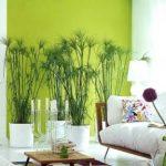 Кімнатні рослини і оформлення вітальні