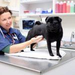 Лучшая ветеринарная клиника в ОАЭ